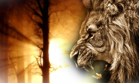 Angry lion roaring at tree